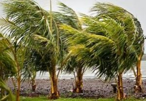 Small Palm Tree Removal Adelaide