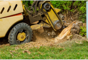 best tree stump removal in adelaide