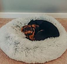 Dog Bed For Anxious Dogs - The Comfort They Need